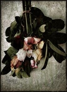 drying roses - Grunge 17