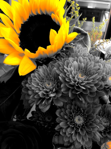 sunflower 1 - yellow