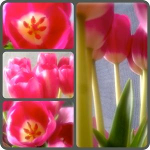 Tulips Diptic