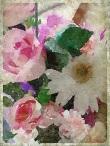 flowers - 6 June 2014