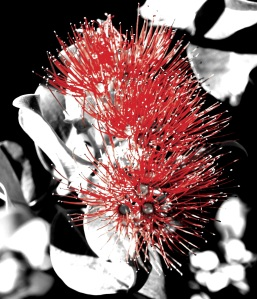 Blossom - B&W&Red - FX Photo Studio PRO