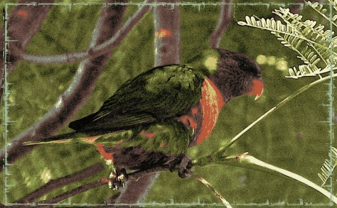 Lorikeet June 2014 - Pop Grunge 18