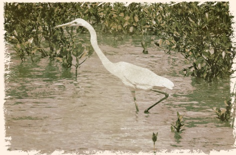 egret 2 - 12 Sep 2014 - Worn Pop 4